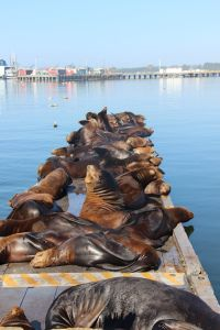 Sea lions! Crescent City California