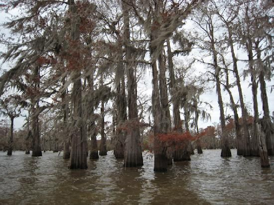 lafayette louisiana | Lafayette Tourism and Vacations: 48 Things to Do in Lafayette, LA ...