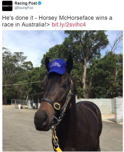 horsey mchorseface