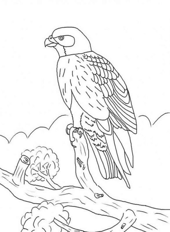 Kids Falcon Bird Coloring Pages Ways to Draw Birds