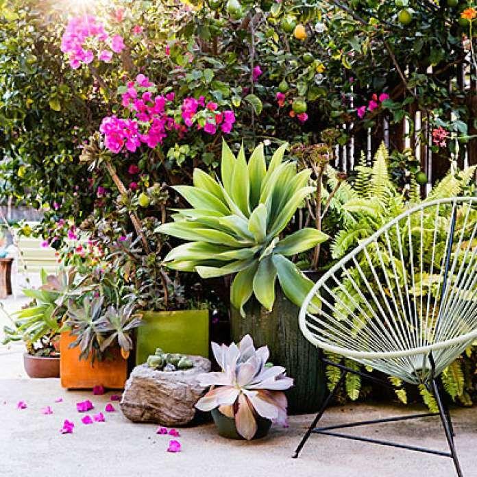 17 Best Ideas About Spanish Patio On Pinterest: 17 Best Ideas About Bougainvillea Tree On Pinterest