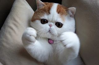 Tips Memberikan Nama Kucing yang Lucu dan Bagus untuk Semua Kucing,