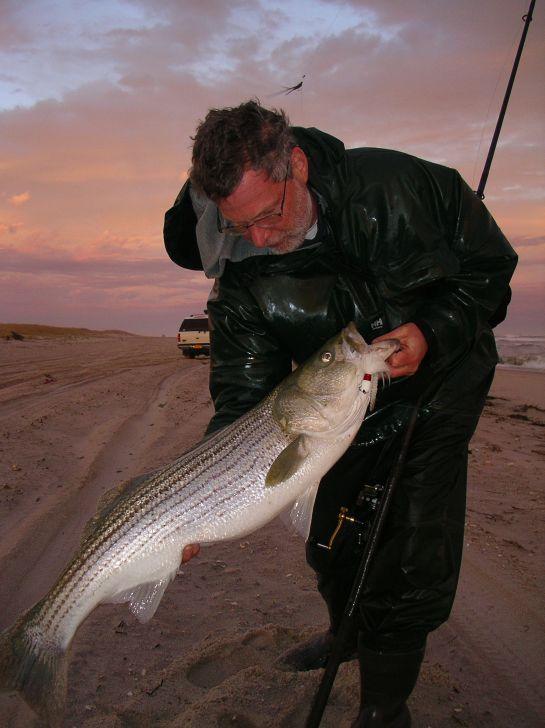 58 best images about striper striper striper on for Striper fishing tips