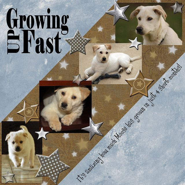 .⊱✿-✿⊰ Follow the Scrapbook Pages board & visit GrannyEnchanted.Com for thousands of digital scrapbook freebies. ⊱✿-✿⊰