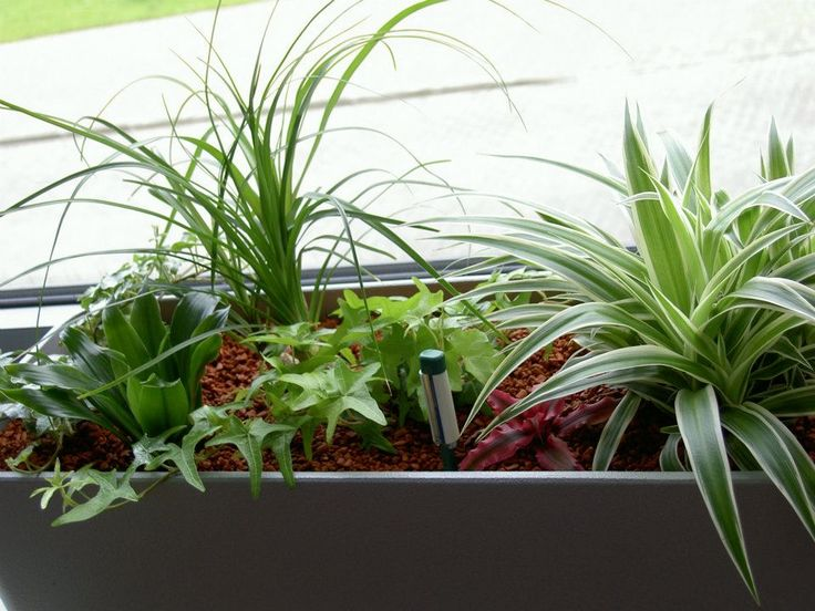 Indoor plants in an office by ROSMARINO