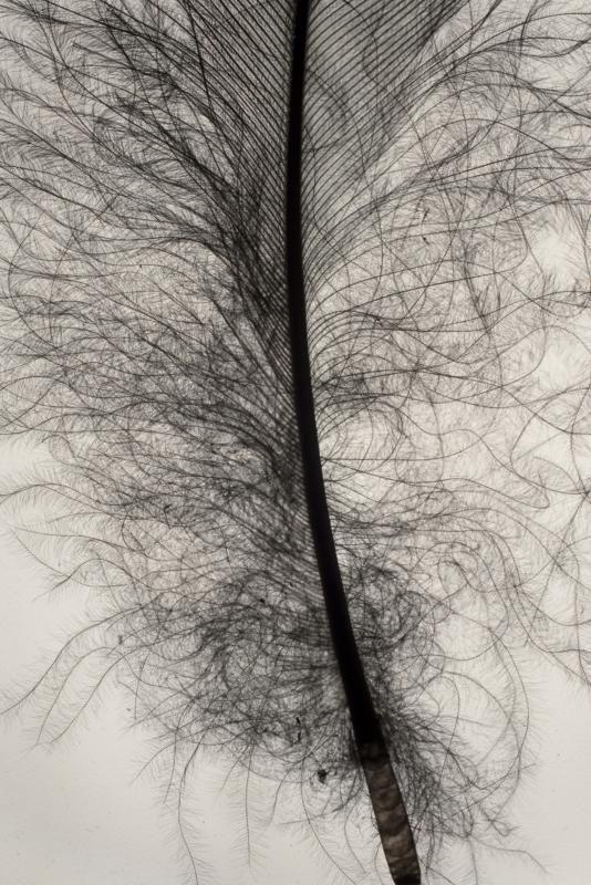 Francisco Tropa Penas (Feathers), 2010 Series of 20 prints, each 60 x 40 cm Courtesy of Galerija Gregor Podnar