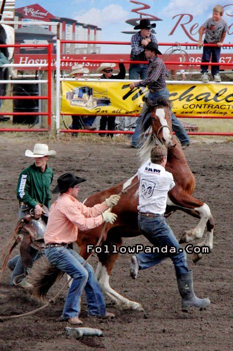 Wild Horse Saddle at Teepee Creek Stampede Rodeo Event - County of Grande Prairie, Alberta, Canada | FollowPanda.Com