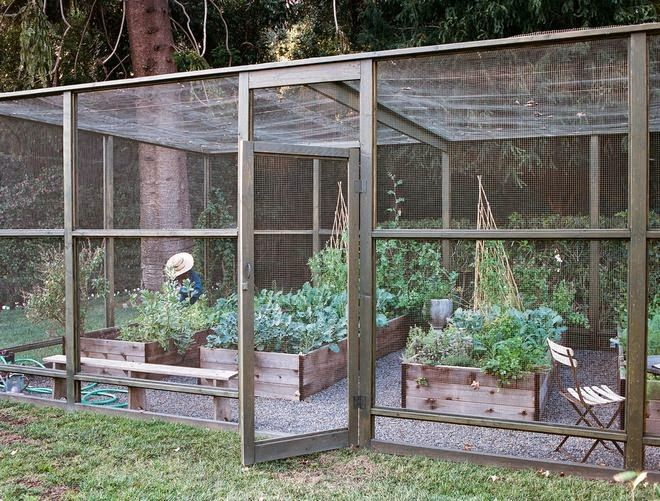 Screened in garden with raised beds. Keeping out birds, large bugs, dogs, and chickens