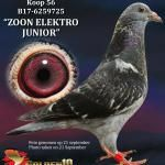 "056 - B17-6259725 ""ZOON ELEKTRO JUNIOR"" ♂   De Duif"