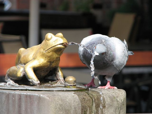 The pigeon and the frog/     Taken in Toruń, Poland. There is some legend about Toruń connected with frogs so somefrog-fountain stays in this city. Pigeons often drink water from this fountain.