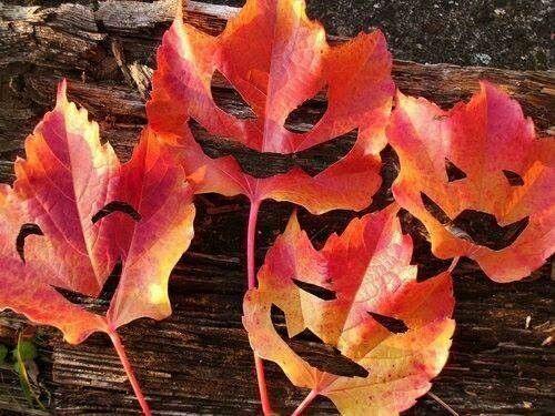 """""""B"""" wie buntes Laub - und wenn man eine Fratze reinschneidet, hat man tolle Halloween-Deko! #HerbstABC"""