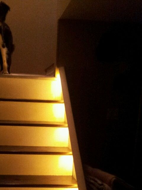 Commercial Basement Stair Lighting: Rope Lighting On The Basement Stairs :)
