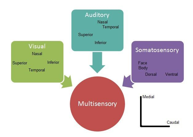 A sensory modality (also called a stimulus modality) is an aspect of a stimulus or what is perceived after a stimulus.     Read more about sensory modalities in the Boundless open textbook.