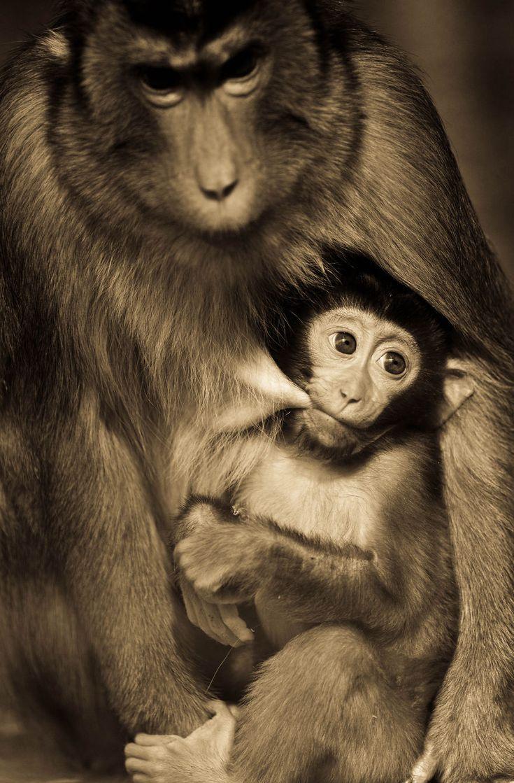 My Wildlife Photography In Sepia Tones Wild animals