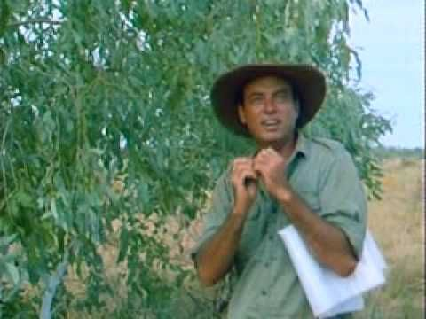 Bush Tucker Man  ... You've heard about the Magic of Australia. Now learn about the real Australia. Learn about the foods that allowed the Aborigines to survive as they went Walkabout. Travel Australia with The Bush Tucker Man - a living legend - as he shows you the wonders of Outback and those natural foods with their magical qualities.      Todays episode is The Desert part 3 of 3.