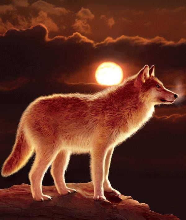 Sunset Wolf (Glowing Warmly) For Wolf's room maybe