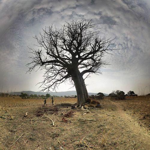 Baobab tamberma  - Togo