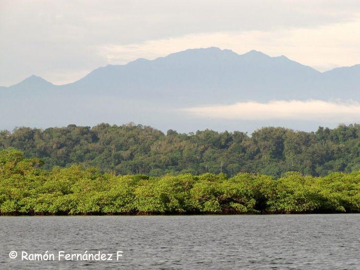 Panama Natural History Volcan Baru