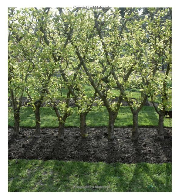 Espaliered Fruit Trees gardendesign landscapearchitecture