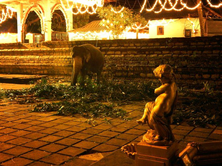 Sri Lanka-Kandy (Esala Perahera)  #travel #srilanka #asia #travelphoto #wander #backpacker #traveling #ceylon #wander