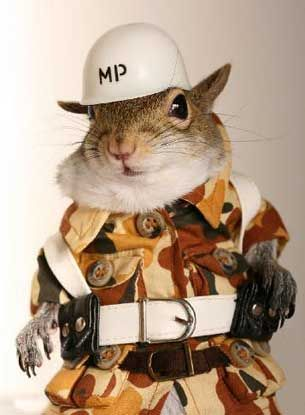 : Silly Squirrels, Military Humor, Squirr Squirrels, Bush Police, Funny Stuff, Animal Friends, Army Animal, Army Squirrels, Sugarbush Squirrels