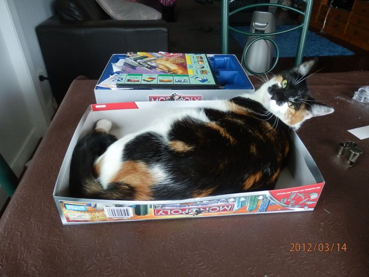 i wanna play monopoly