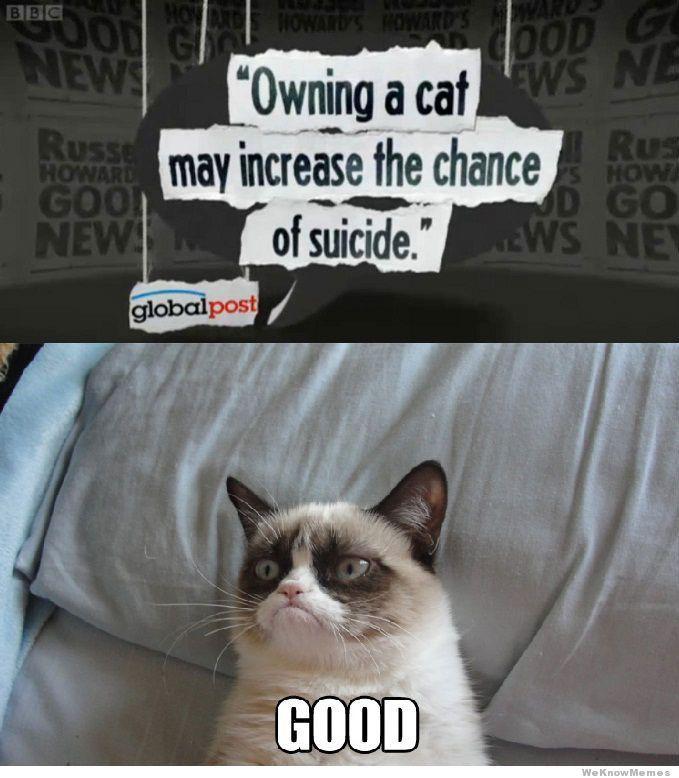 Angry Cat Meme - hahaha! He's so pouty! | Cute Kitten/Cat ...