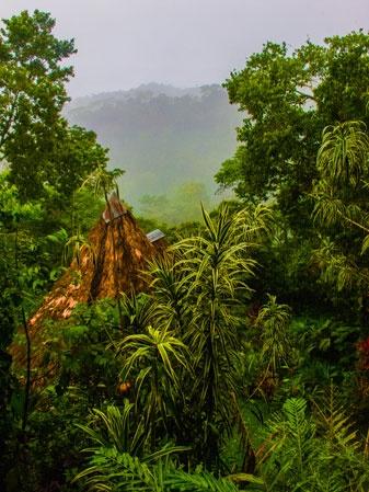 Costa Rican lush :)