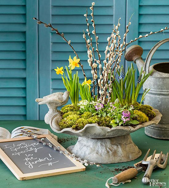 A shallow concrete birdbath can hold just enough soil to make a pretty display of moss, spring-flowering bulbs, and pussy willow branches. It's the perfect miniature garden to enjoy indoors before your outdoor landscape blooms. Purchase pots of favorite spring primroses, pansies, alyssum, grape hyacinth, or tête-à-tête daffodils. Place a grouping of these plants in the saucer or dish. You might need to remove some of the excess soil and roots from the annuals or separate individual bulbs…