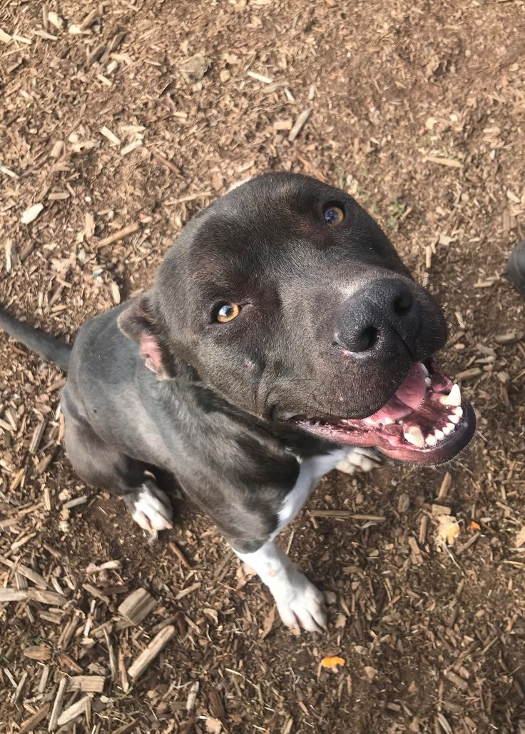 Adopt me! Pets of the week from North State rescues