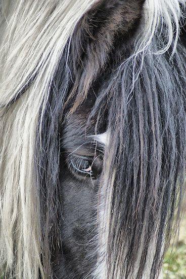 Through the eye of the horse