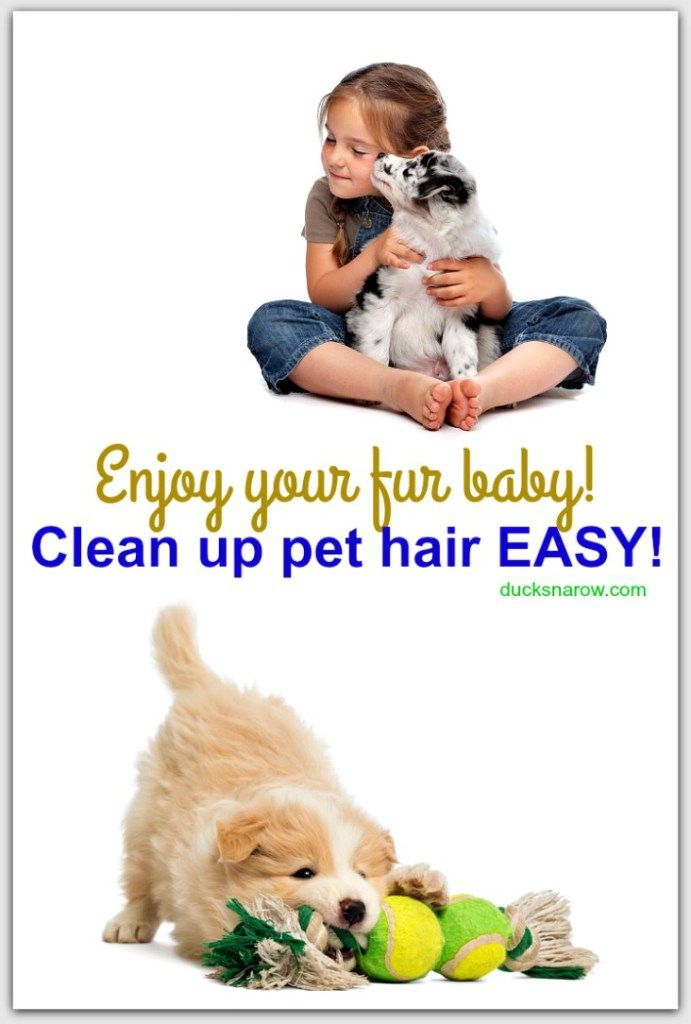 How To Clean Up Pet Hair Easy Tips Pets Pet Hair Best Vacuum