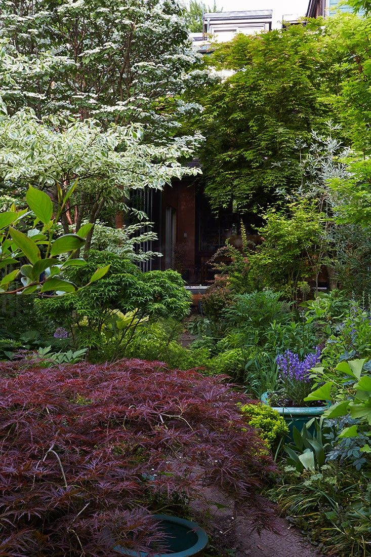 Marjorie Harris Toronto garden Japanese maple tree ; Gardenista