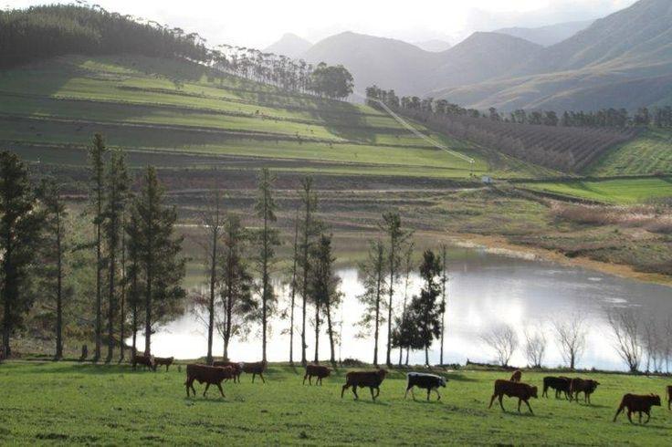 A farm in Greyton SA