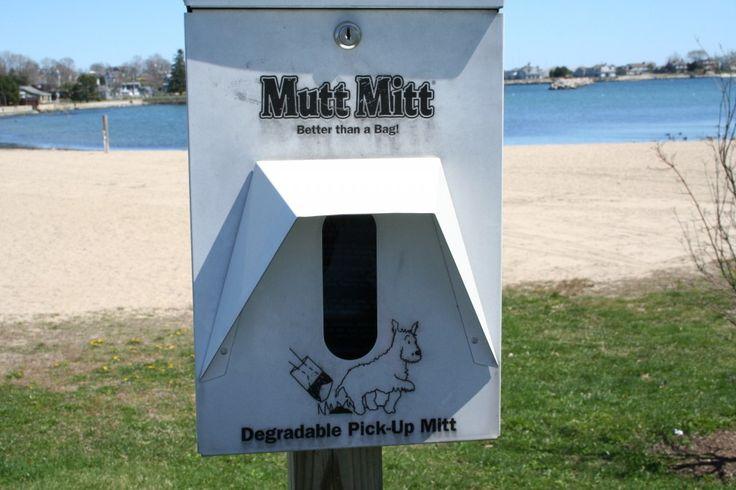 Dog-friendly beach in Connecticut - Groton