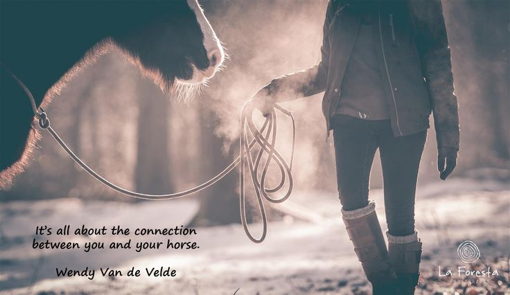 It's all about the connection between you and your horse.