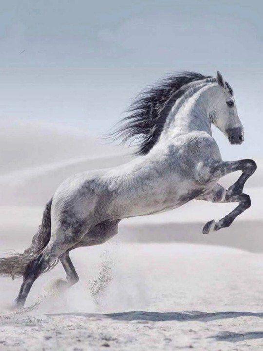 новые красивые картинки с лошадьми поможет проснуться