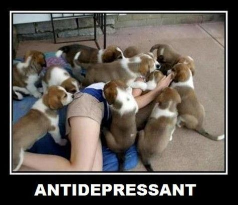 It'd work for me.: Puppies, Dogs, Pet, Puppys, So True, Funny Stuff, Things, Instant Antidepressant, Animal