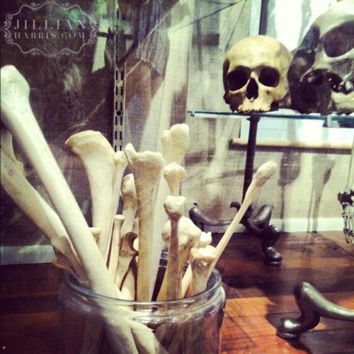 Jillian Harris' visit to Evolution in NYC