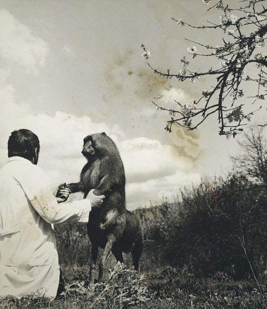Image result for joan fontcuberta science museum exhibition