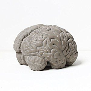 Lyon Beton Grey Matter Brain Concrete Bookends: Amazon.co.uk: Kitchen & Home