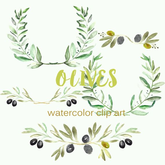 Olives Watercolor Hand drawn clipart set Olives. Romantic wedding, tender, green wreath, olive arrangements. Romantic et tender composition with