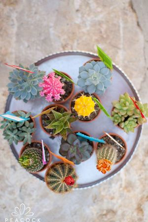 succulents wedding favours  mexican fiest wedding colourful brides of adelaide magazine