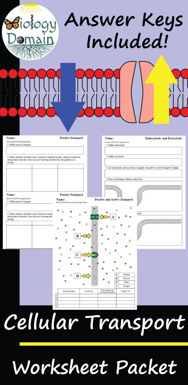 Cellular Transport Worksheets Word Problem Worksheets Covalent Bonding Worksheet Biology Worksheet [ 1500 x 736 Pixel ]