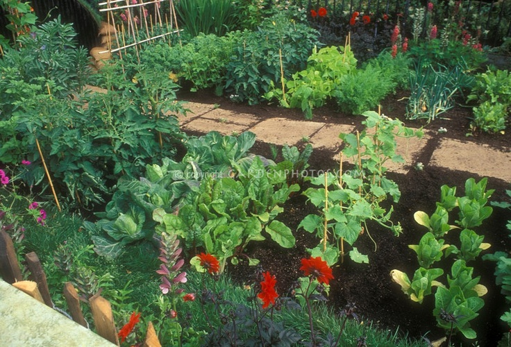 Pretty vegetable garden with flowers stone pathway - How to store lettuce from garden ...
