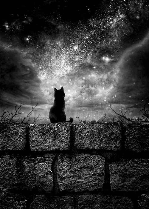 Night Cat Productions: 583 Best Black Cats Images On Pinterest