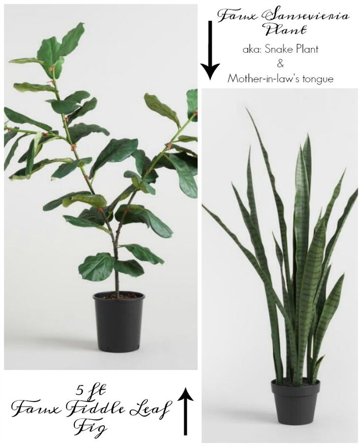 I tried, I really did, friends…I promise! I read article after article with all of the tips and tricks on how to keep your fiddle leaf fig tree thriving but unfortunately it just didn't work out so we finally went over to the faux side and today I'm sharing an honest review of what I believe …