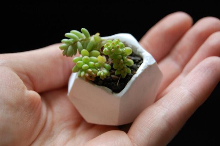 DIY: tiny plants in tiny pots (http://transientexpression.com/tutorial-tiny-polymer-clay-plant-pots/)