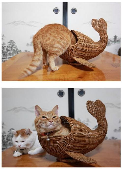 Hey Frank, look at me, I'm a catfish.