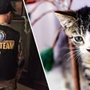 Cat Team 7 was started in 2016 at Naval Station Norfolk, Virginia to help save as many stray cats and kittens as possible. Check out their FB page, Cat Team 7, for cats ready for adoption. #CatTeam7 #PA